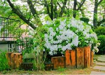 庭の立ちブロック
